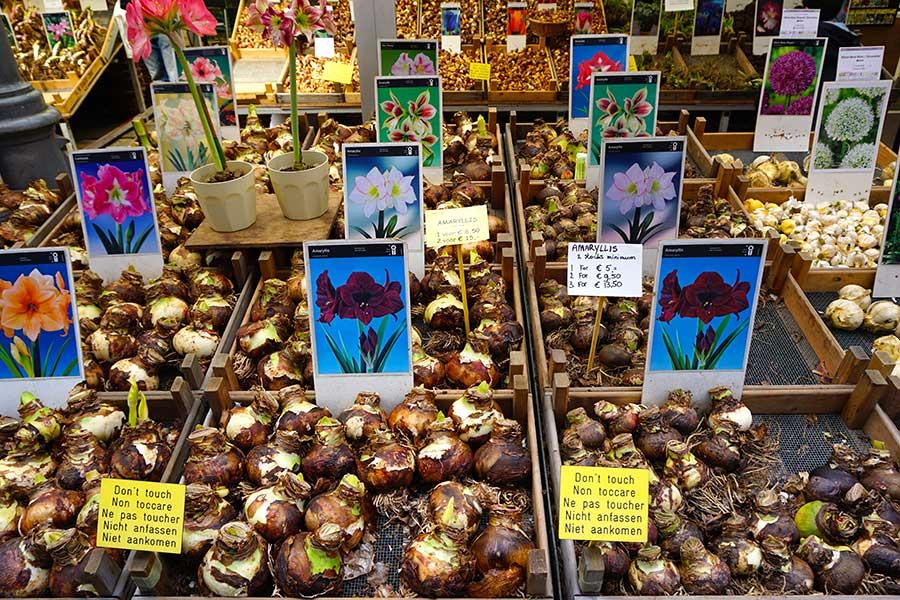 mercado_flores_amsterdam