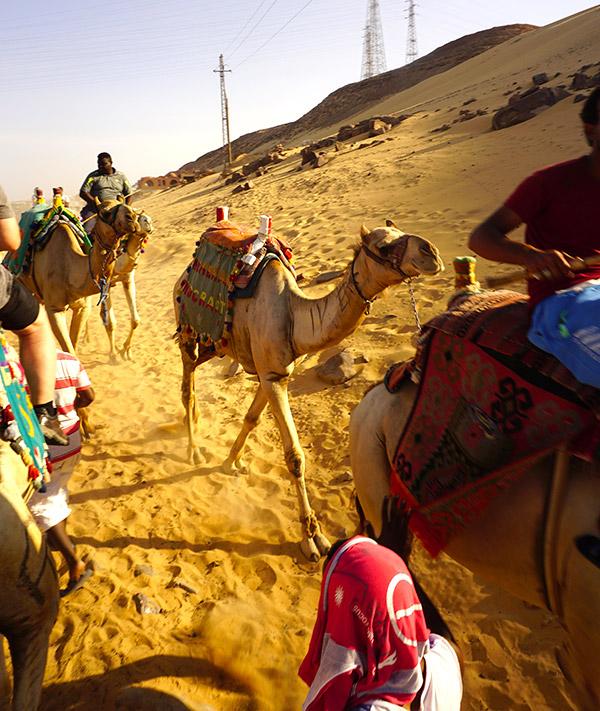 camellos en el pueblo nubio aswan