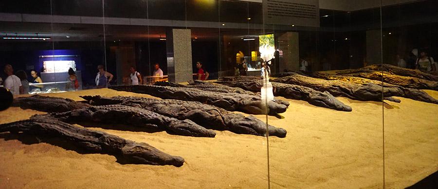 museo cocodrilos kom combo