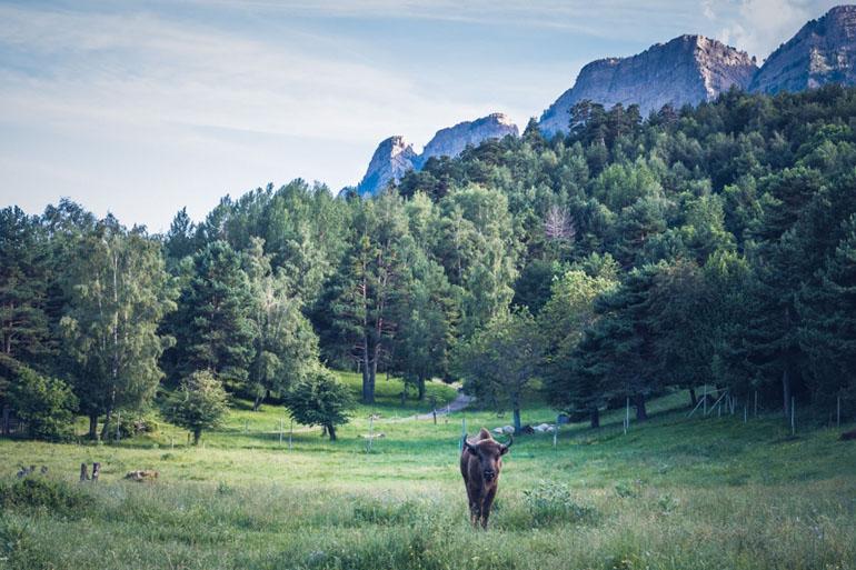 Qué hacer en el pirineo aragonés con niños